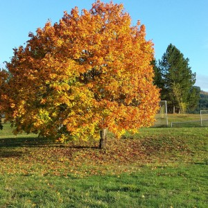 Tennis-courts-in-autumn-colors